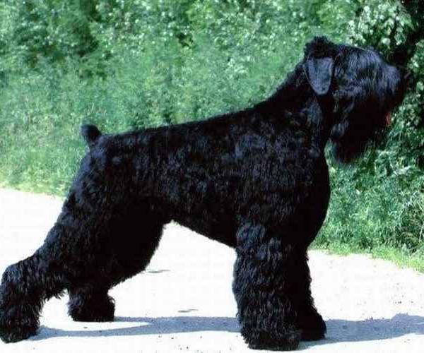 собака-12