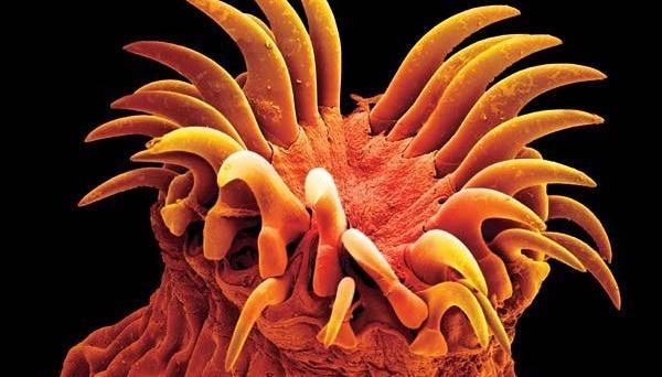 антибиотик от паразитов на коже