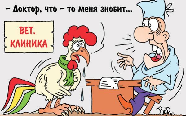 ptichii-gripp