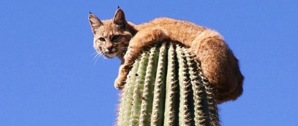 ris-na-kaktuse