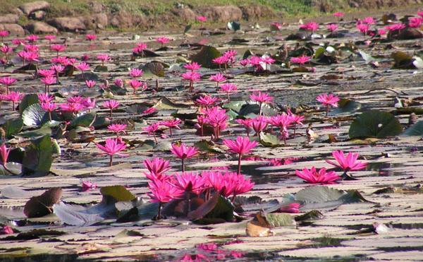 reki-kambodzi