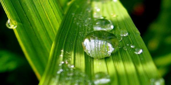 biomassa-vozobnovlaemii-istochnik-energii