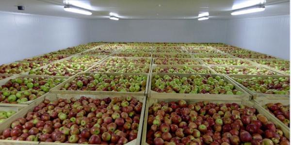 chranenie-ovozchei-i-fruktov