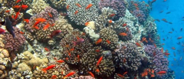 korallowie-rifi-bagam