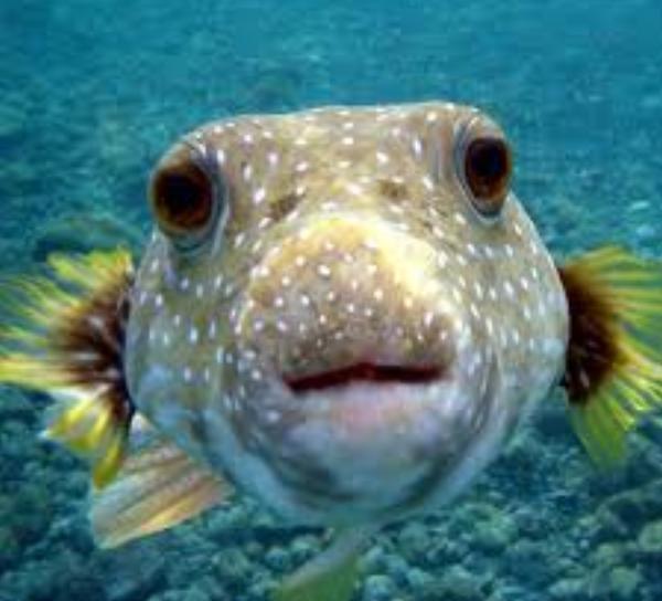 riba-sobaka