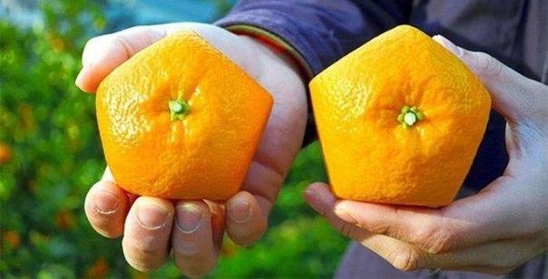 japonskie-pjatiugolnie-apelsini