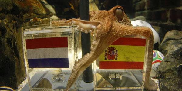 osminog-paul-vibiraet-flag