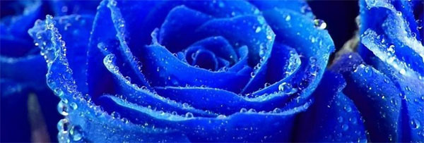 sinie-rozi