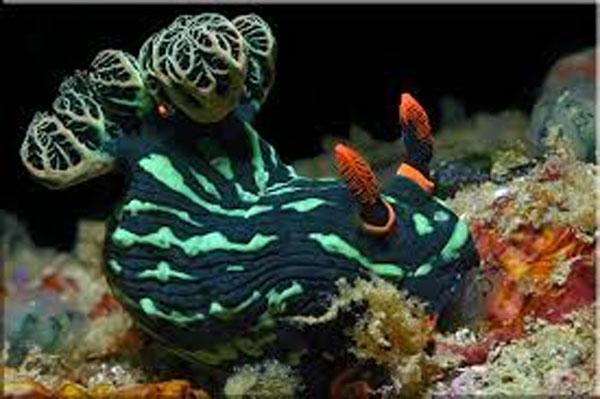 tropicheskie-ribi
