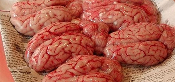 mozgi-obezjani