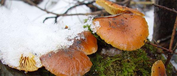zimnii-openoc