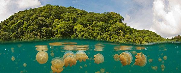 ostrov-meduz