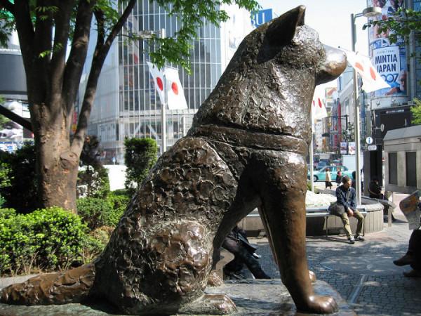 Памятник Хатико в Токир
